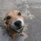 愛犬のためのCBDオイル|ペットだって十分ストレス溜まってる..