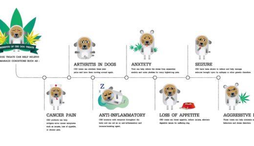 ペットのためのCBDオイル|CBDは動物たちにも有効