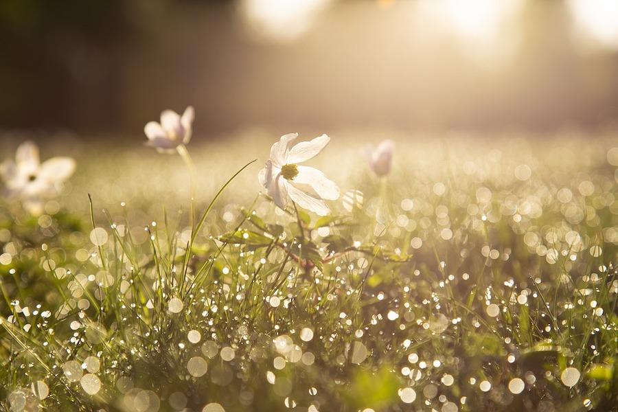 朝露に濡れた草花のフレッシュな写真