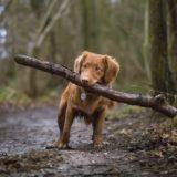 ペットのためのオススメCBDオイル|CBDは動物たちの健康にも有効