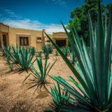 メキシコの建物とアガベの畑
