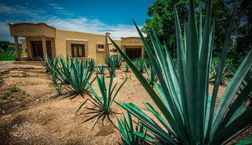 テキーラの正式な飲み方|メキシコの酒テキーラをショットで飲む