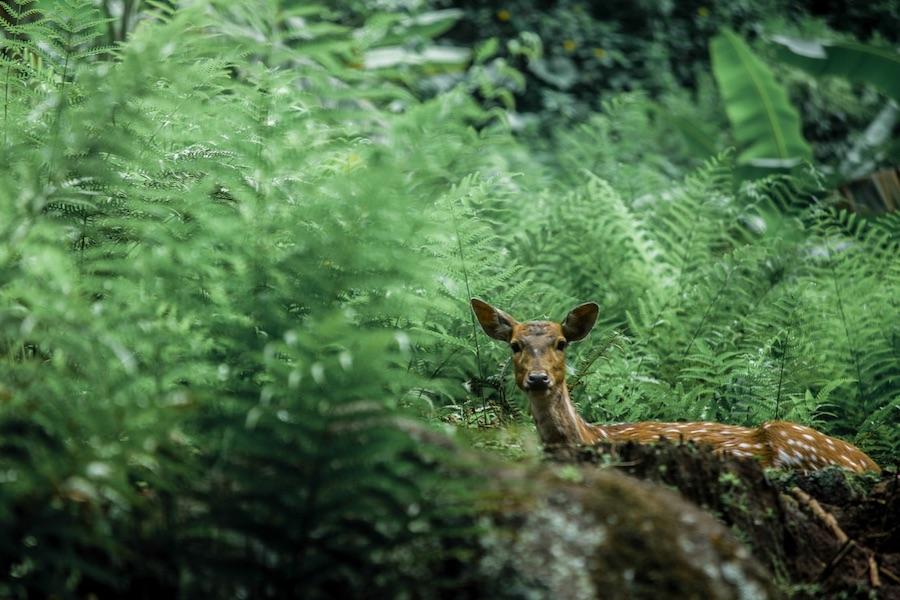 生い茂った草の中から覗く鹿